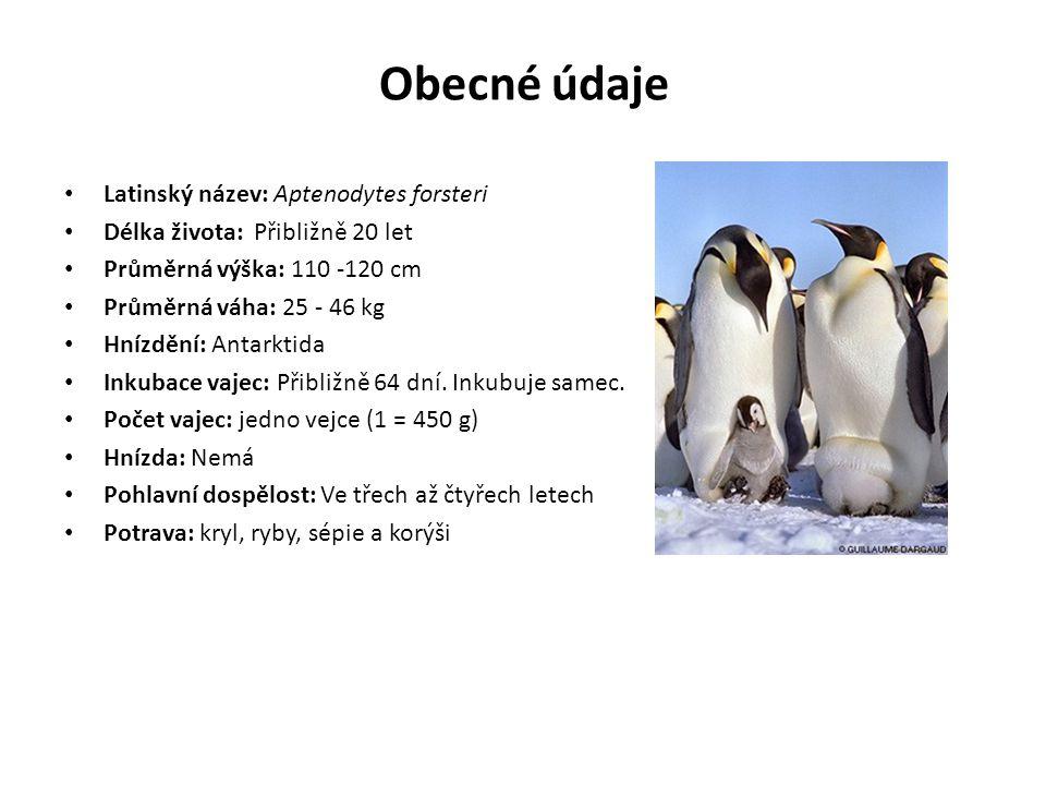 Obecné údaje Latinský název: Aptenodytes forsteri Délka života: Přibližně 20 let Průměrná výška: 110 -120 cm Průměrná váha: 25 - 46 kg Hnízdění: Antar
