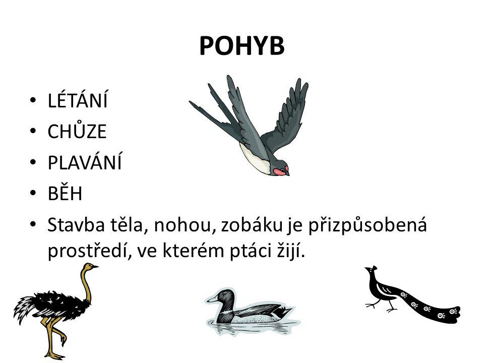 POHYB LÉTÁNÍ CHŮZE PLAVÁNÍ BĚH Stavba těla, nohou, zobáku je přizpůsobená prostředí, ve kterém ptáci žijí.