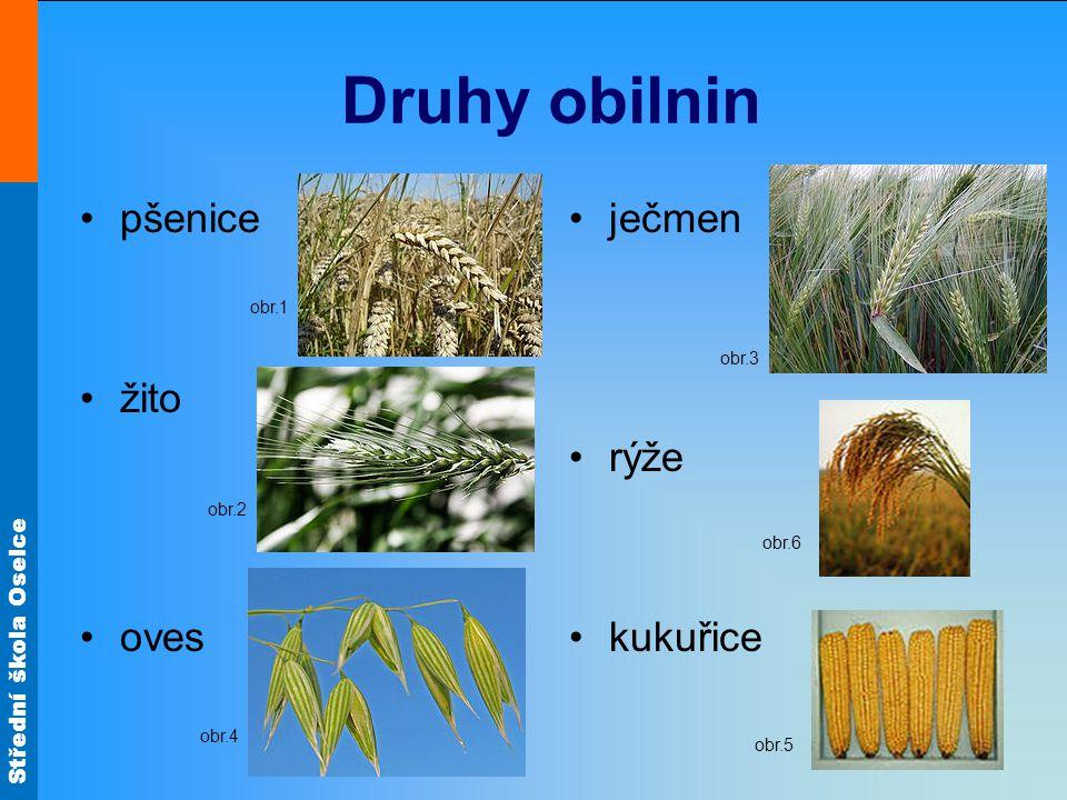 Střední škola Oselce Druhy obilnin pšenice žito oves ječmen rýže kukuřice obr.3 obr.1 obr.2 obr.4 obr.6 obr.5