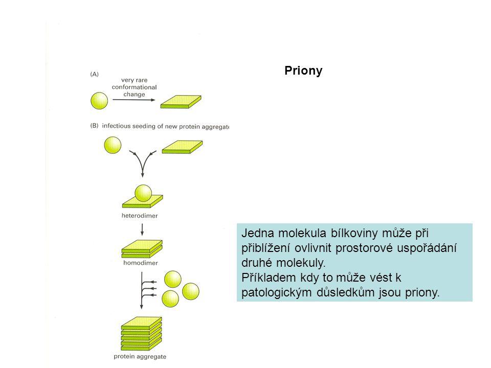 Priony Jedna molekula bílkoviny může při přiblížení ovlivnit prostorové uspořádání druhé molekuly. Příkladem kdy to může vést k patologickým důsledkům