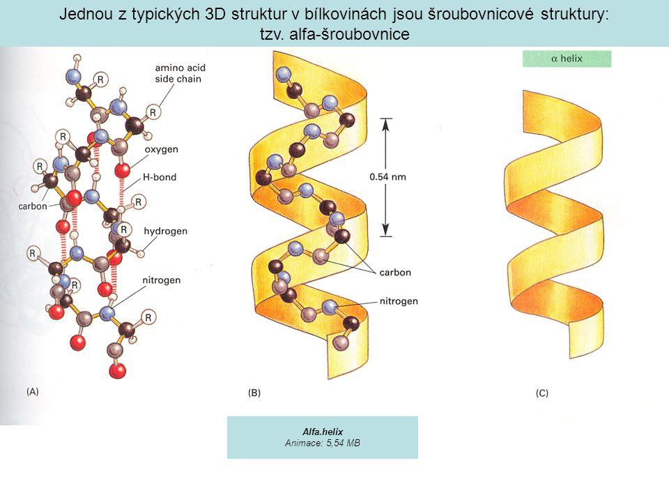 Jednou z typických 3D struktur v bílkovinách jsou šroubovnicové struktury: tzv. alfa-šroubovnice Alfa.helix Animace: 5,54 MB