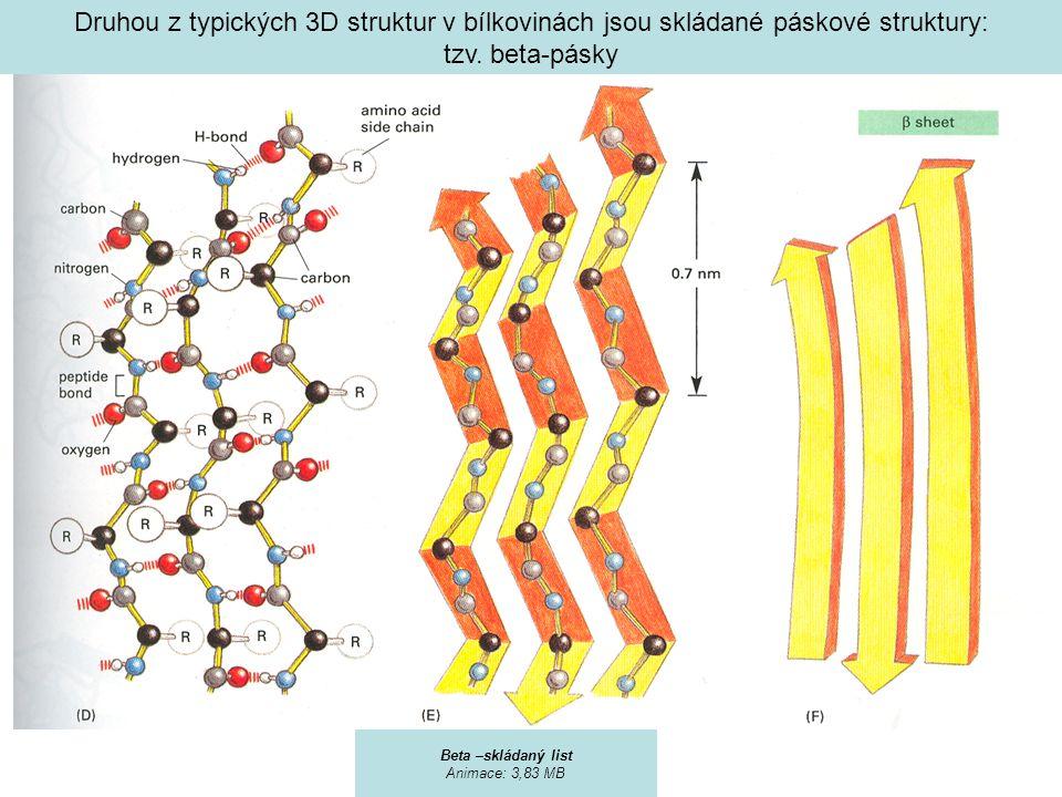 Druhou z typických 3D struktur v bílkovinách jsou skládané páskové struktury: tzv. beta-pásky Beta –skládaný list Animace: 3,83 MB