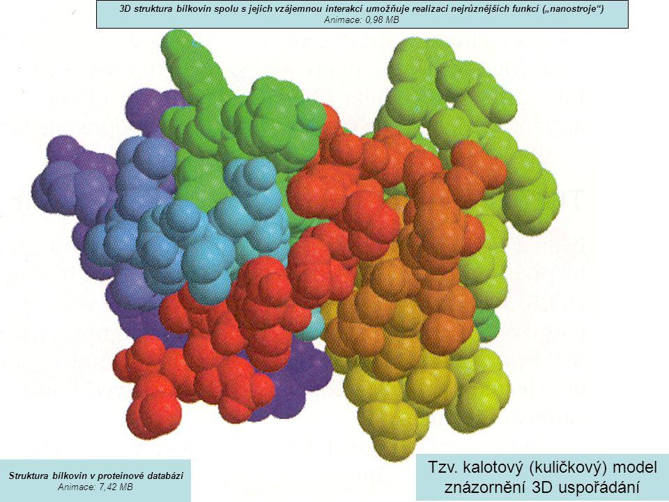 Tzv. kalotový (kuličkový) model znázornění 3D uspořádání 3D struktura bílkovin spolu s jejich vzájemnou interakcí umožňuje realizaci nejrůznějších fun