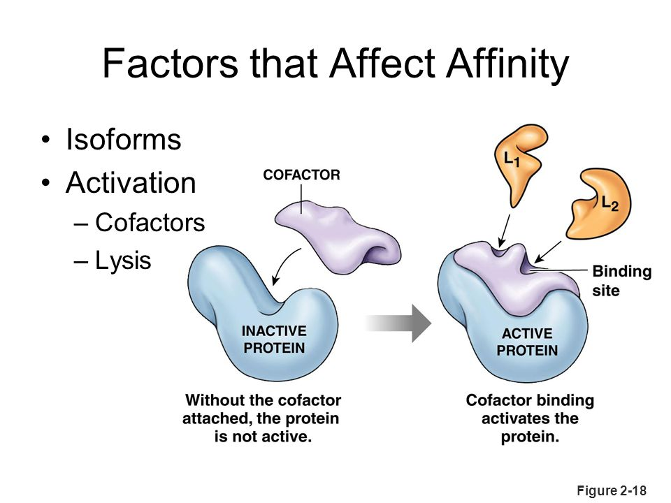 Figure 2-18 Factors that Affect Affinity Isoforms Activation –Cofactors –Lysis