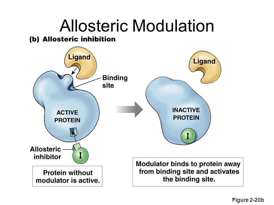 Allosteric Modulation Figure 2-20b