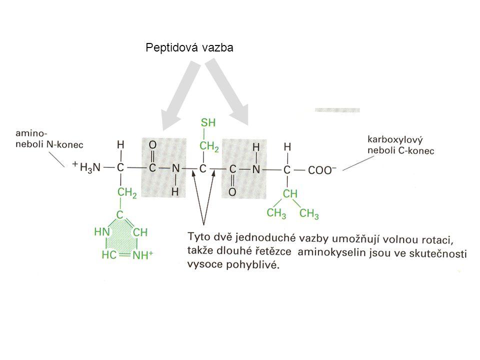 Jednou z typických 3D struktur v bílkovinách jsou šroubovnicové struktury: tzv.