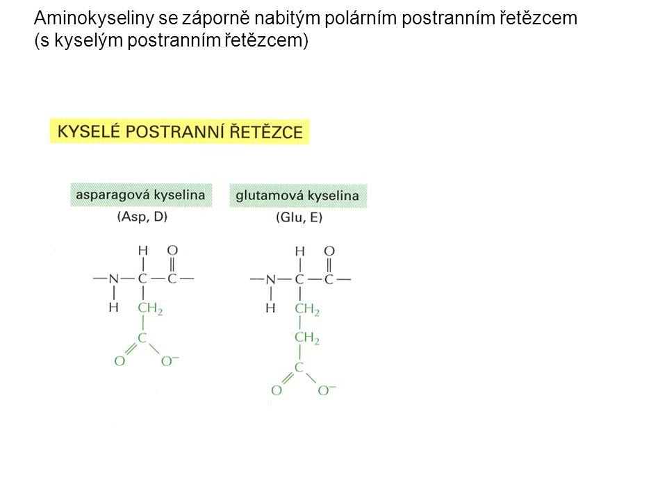 Aminokyseliny se záporně nabitým polárním postranním řetězcem (s kyselým postranním řetězcem)