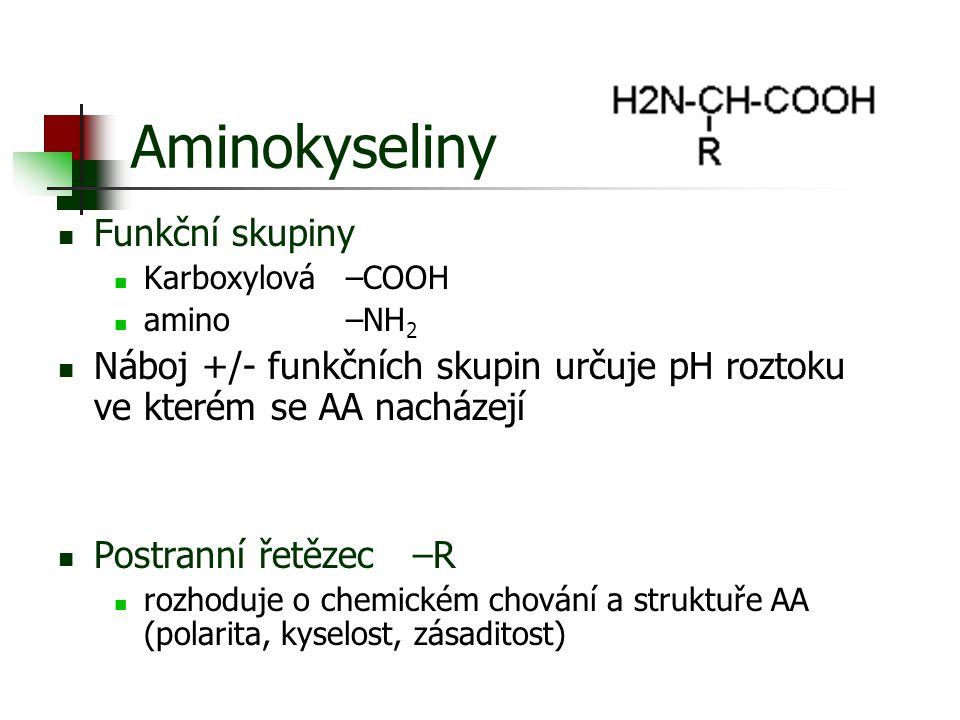 Aminokyseliny Funkční skupiny Karboxylová –COOH amino –NH 2 Náboj +/- funkčních skupin určuje pH roztoku ve kterém se AA nacházejí Postranní řetězec –
