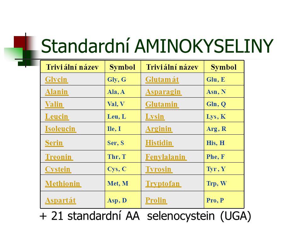 Standardní AMINOKYSELINY + 21 standardní AA selenocystein (UGA)