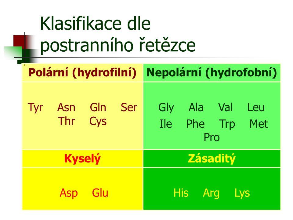 Klasifikace dle postranního řetězce Polární (hydrofilní)Nepolární (hydrofobní) Tyr Asn Gln Ser Thr Cys Gly Ala Val Leu Ile Phe Trp Met Pro KyselýZásad