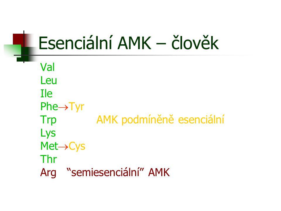 "Esenciální AMK – člověk Val Leu Ile Phe  Tyr TrpAMK podmíněně esenciální Lys Met  Cys Thr Arg ""semiesenciální"" AMK"