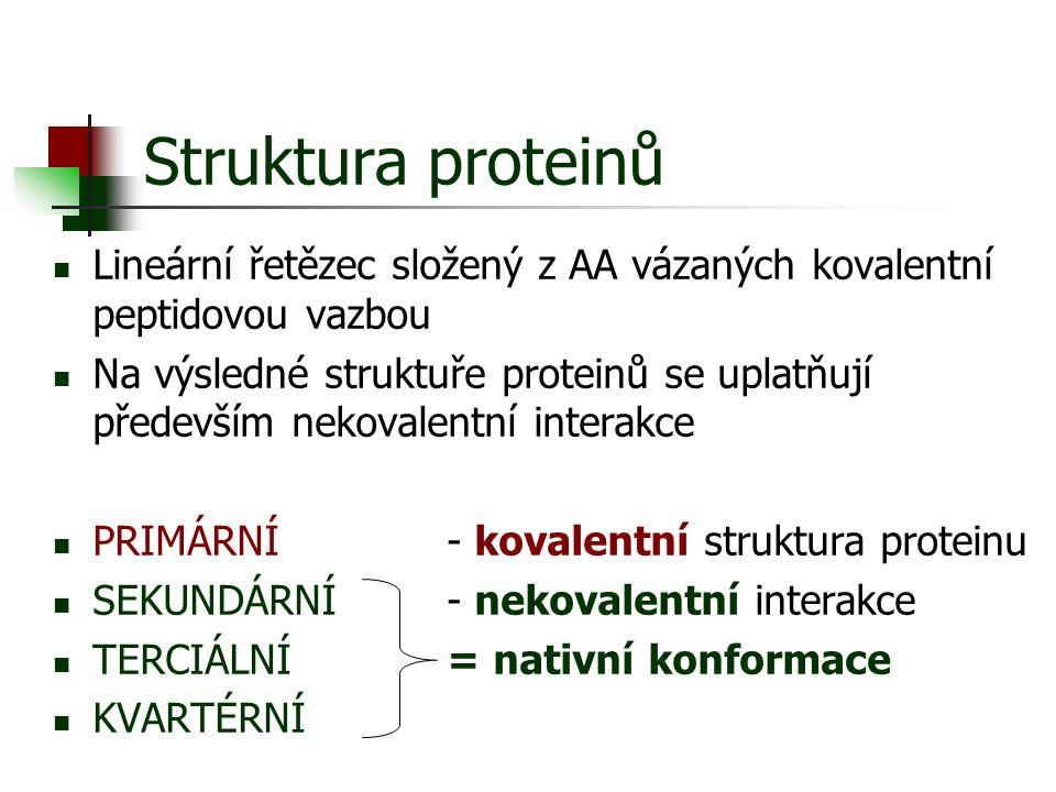 Struktura proteinů Lineární řetězec složený z AA vázaných kovalentní peptidovou vazbou Na výsledné struktuře proteinů se uplatňují především nekovalen