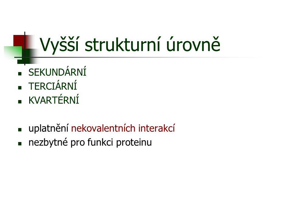 Vyšší strukturní úrovně SEKUNDÁRNÍ TERCIÁRNÍ KVARTÉRNÍ uplatnění nekovalentních interakcí nezbytné pro funkci proteinu