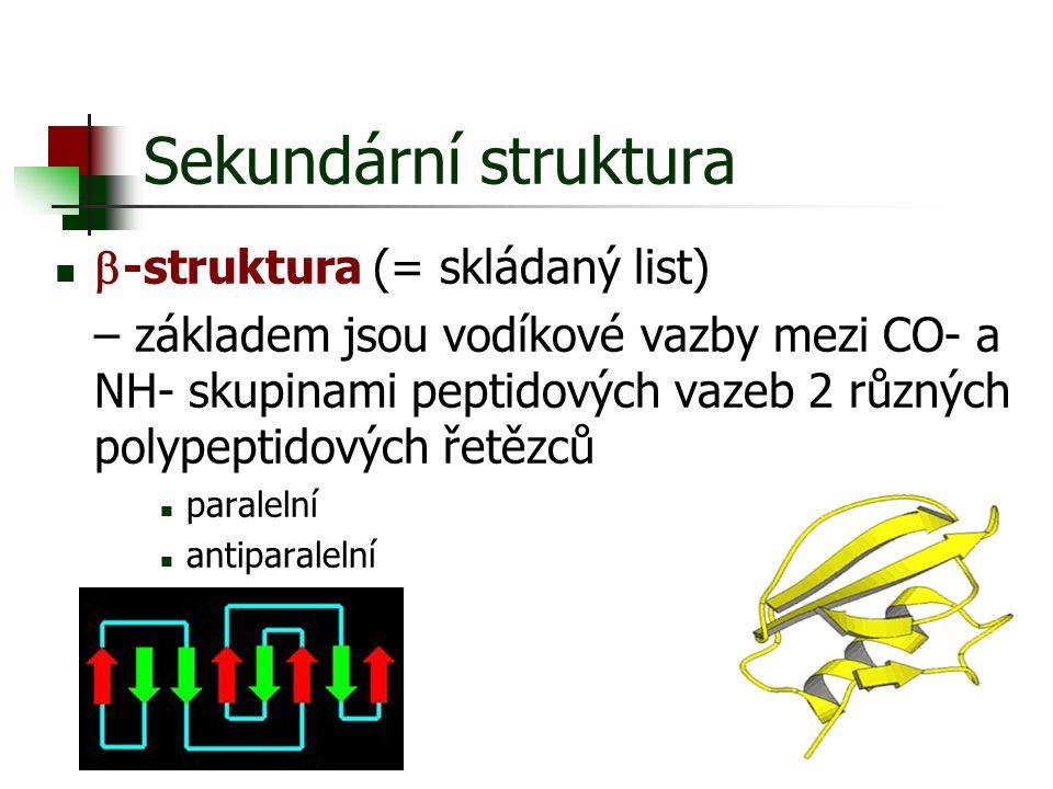 Sekundární struktura  -struktura (= skládaný list) – základem jsou vodíkové vazby mezi CO- a NH- skupinami peptidových vazeb 2 různých polypeptidovýc