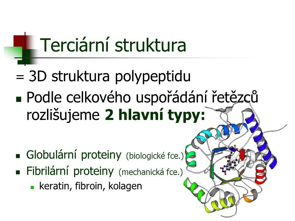Terciární struktura = 3D struktura polypeptidu Podle celkového uspořádání řetězců rozlišujeme 2 hlavní typy: Globulární proteiny (biologické fce.) Fib