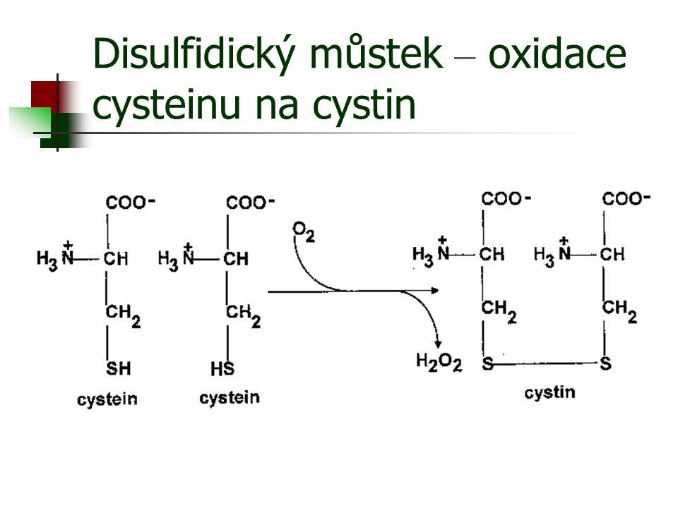 Disulfidický můstek – oxidace cysteinu na cystin