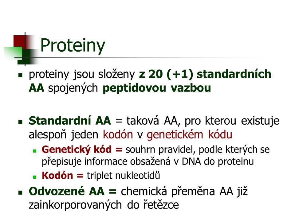 Proteiny proteiny jsou složeny z 20 (+1) standardních AA spojených peptidovou vazbou Standardní AA = taková AA, pro kterou existuje alespoň jeden kodó