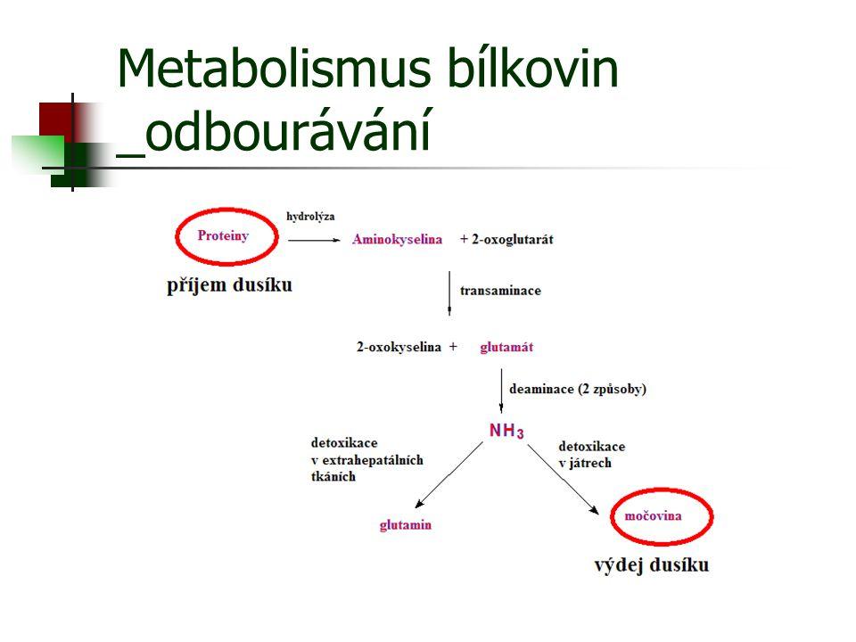 Metabolismus bílkovin _odbourávání