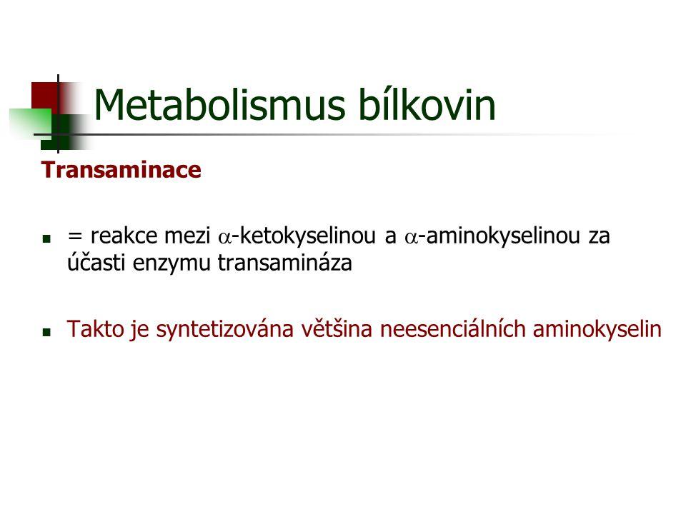 Metabolismus bílkovin Transaminace = reakce mezi  -ketokyselinou a  -aminokyselinou za účasti enzymu transamináza Takto je syntetizována většina nee