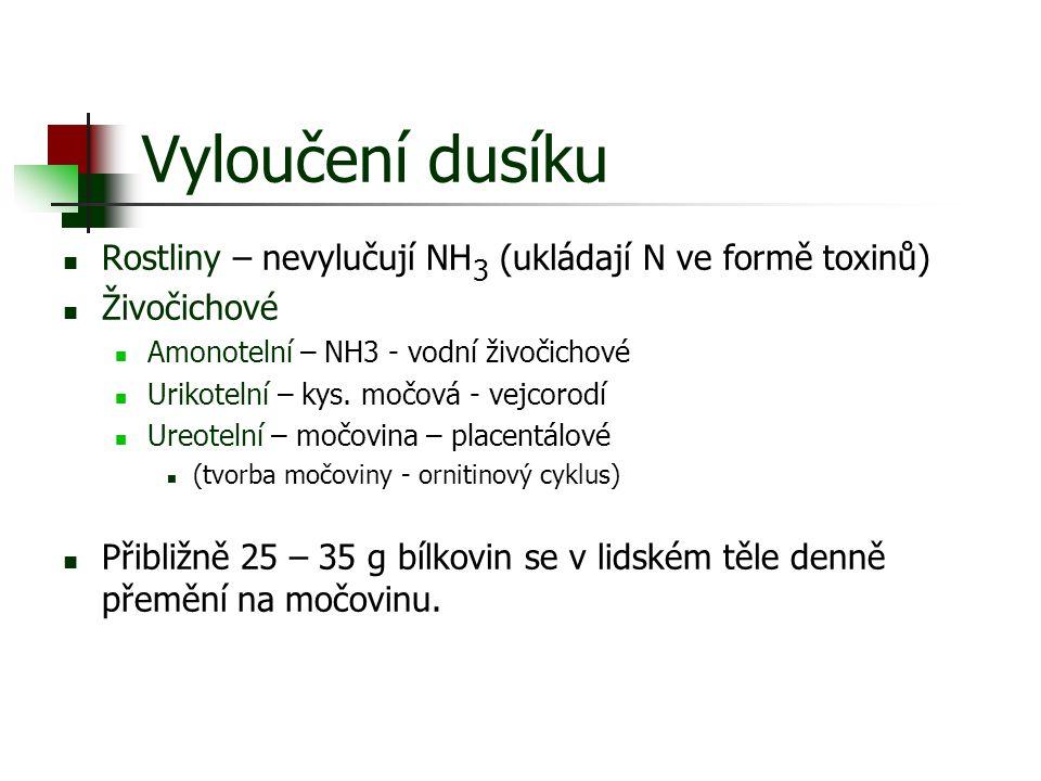 Vyloučení dusíku Rostliny – nevylučují NH 3 (ukládají N ve formě toxinů) Živočichové Amonotelní – NH3 - vodní živočichové Urikotelní – kys. močová - v