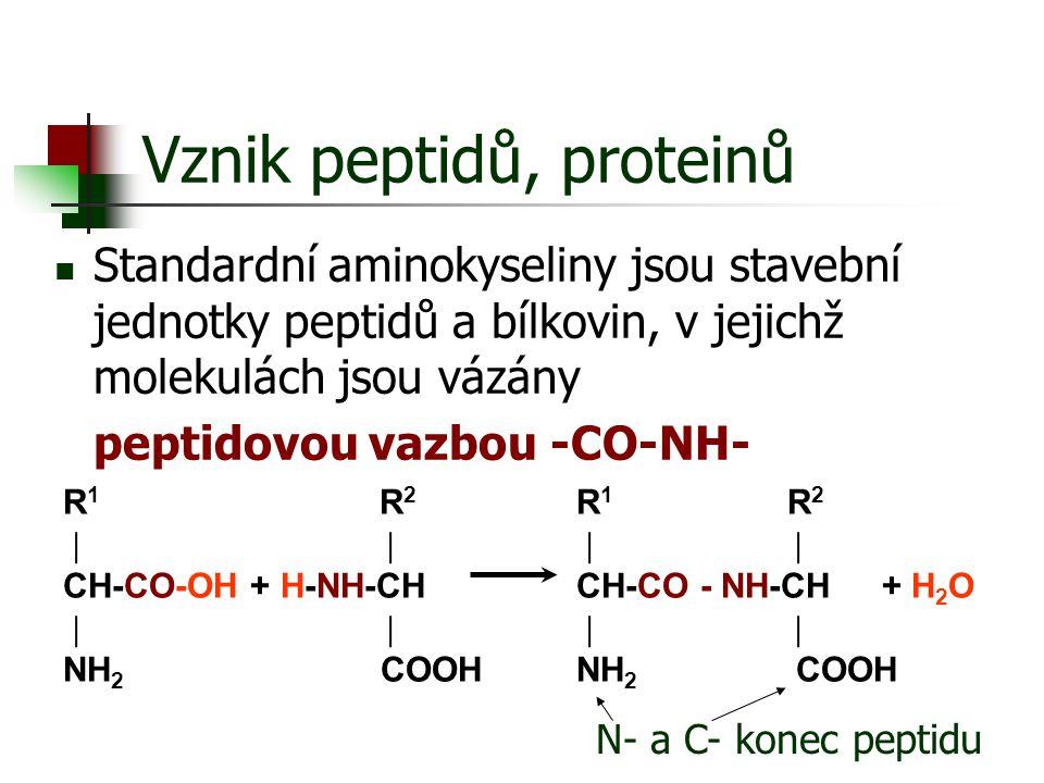 Vznik peptidů, proteinů Standardní aminokyseliny jsou stavební jednotky peptidů a bílkovin, v jejichž molekulách jsou vázány peptidovou vazbou -CO-NH-