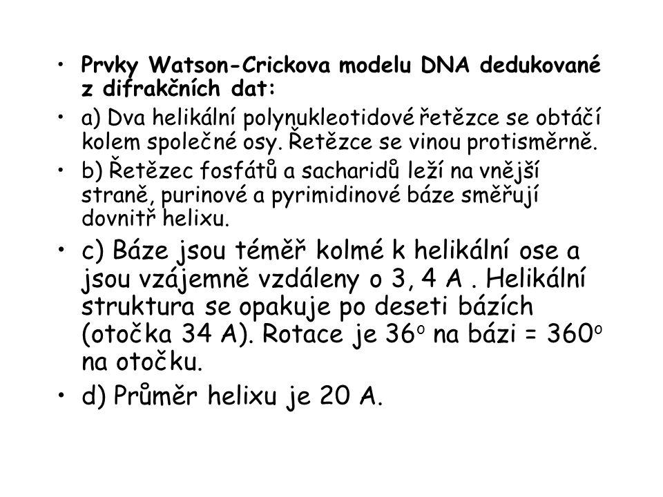Prvky Watson-Crickova modelu DNA dedukované z difrakčních dat: a) Dva helikální polynukleotidové řetězce se obtáčí kolem společné osy. Řetězce se vino