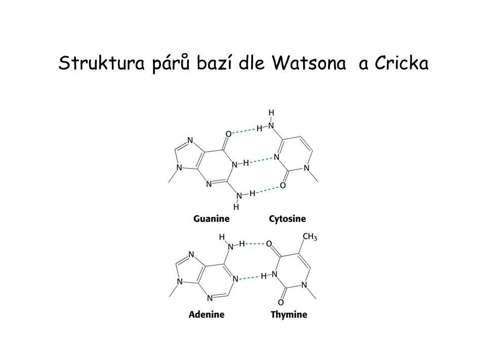 Struktura párů bazí dle Watsona a Cricka