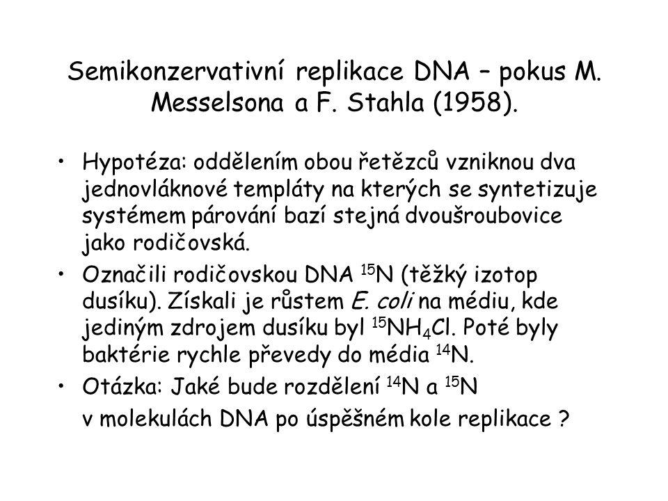 Semikonzervativní replikace DNA – pokus M. Messelsona a F. Stahla (1958). Hypotéza: oddělením obou řetězců vzniknou dva jednovláknové templáty na kter