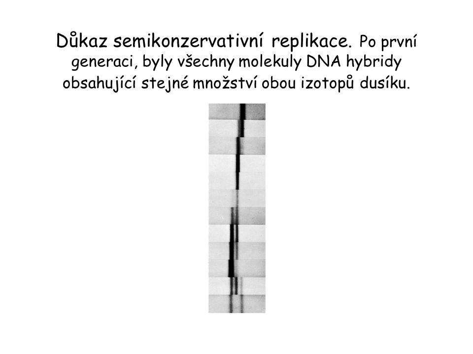 Důkaz semikonzervativní replikace. Po první generaci, byly všechny molekuly DNA hybridy obsahující stejné množství obou izotopů dusíku.