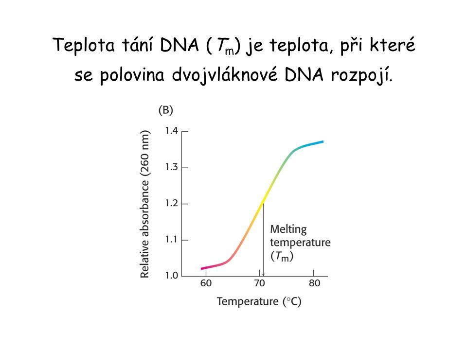 Teplota tání DNA (T m ) je teplota, při které se polovina dvojvláknové DNA rozpojí.