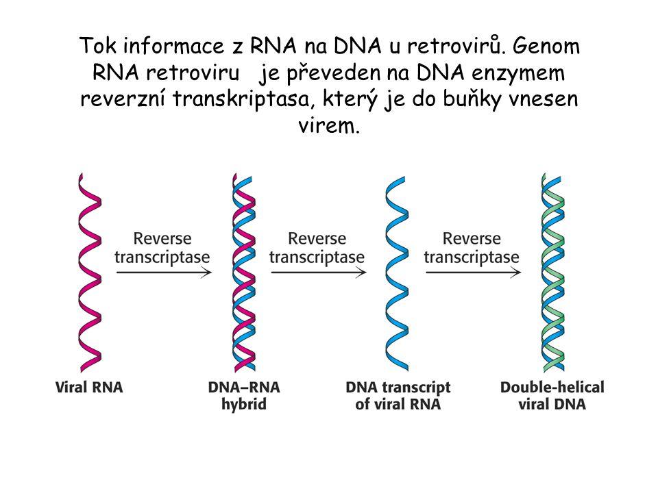 Tok informace z RNA na DNA u retrovirů. Genom RNA retroviru je převeden na DNA enzymem reverzní transkriptasa, který je do buňky vnesen virem.