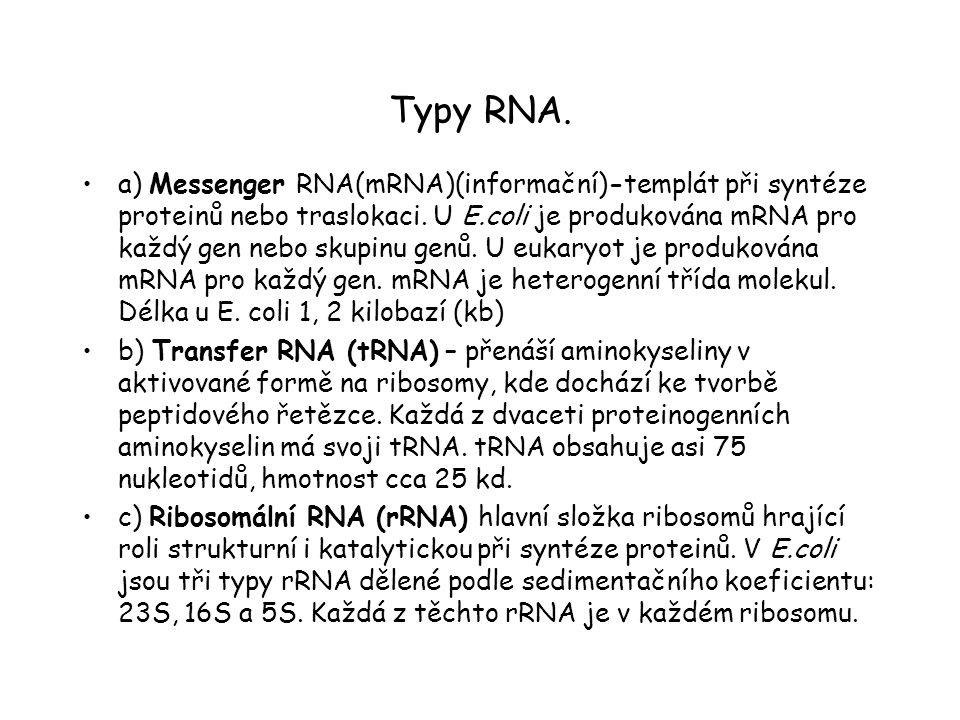 Typy RNA. a) Messenger RNA(mRNA)(informační)-templát při syntéze proteinů nebo traslokaci. U E.coli je produkována mRNA pro každý gen nebo skupinu gen