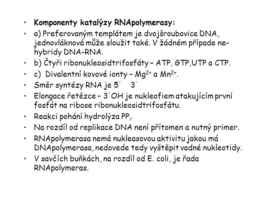 Komponenty katalýzy RNApolymerasy: a) Preferovaným templátem je dvojšroubovice DNA, jednovláknová může sloužit také. V žádném případe ne- hybridy DNA-