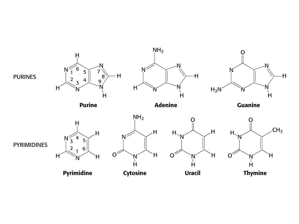 Hlavní charakteristiky genetického kódu Jedině Trp (UGG) a Met (AUG) jsou určeny jedním kodonem.