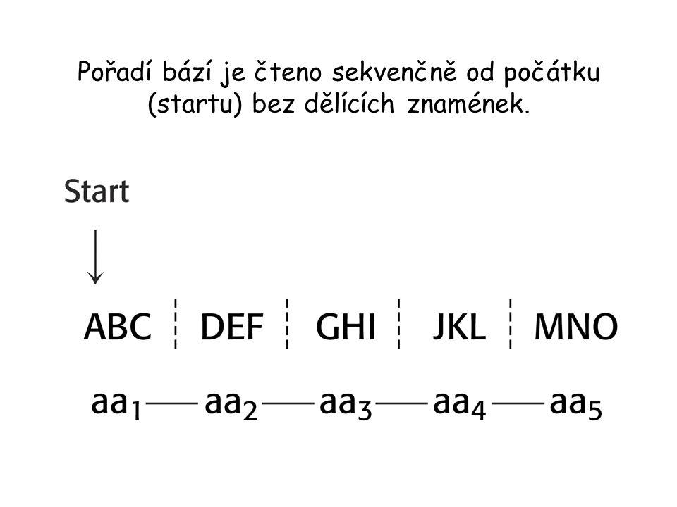 Pořadí bází je čteno sekvenčně od počátku (startu) bez dělících znamének.