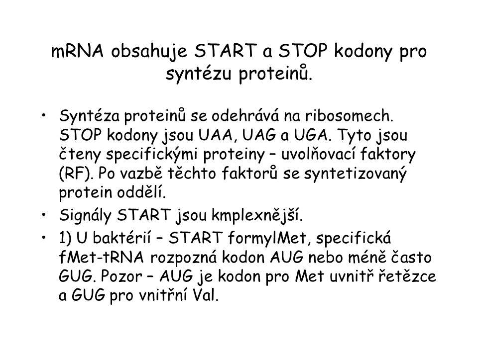 mRNA obsahuje START a STOP kodony pro syntézu proteinů. Syntéza proteinů se odehrává na ribosomech. STOP kodony jsou UAA, UAG a UGA. Tyto jsou čteny s
