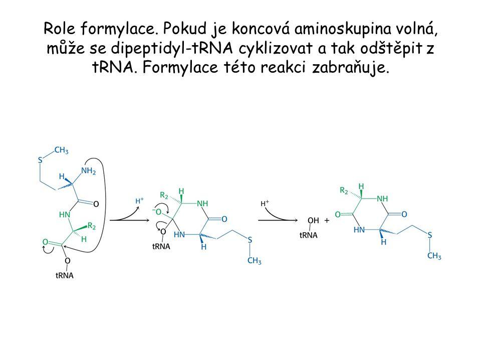 Role formylace. Pokud je koncová aminoskupina volná, může se dipeptidyl-tRNA cyklizovat a tak odštěpit z tRNA. Formylace této reakci zabraňuje.