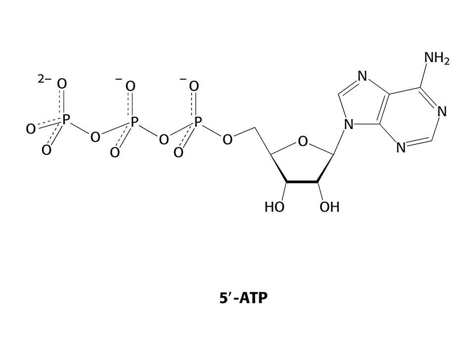 Proteinové faktory hrají klíčové role při syntéze proteinů.