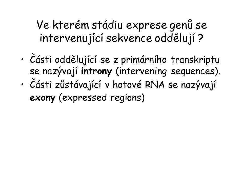Ve kterém stádiu exprese genů se intervenující sekvence oddělují ? Části oddělující se z primárního transkriptu se nazývají introny (intervening seque