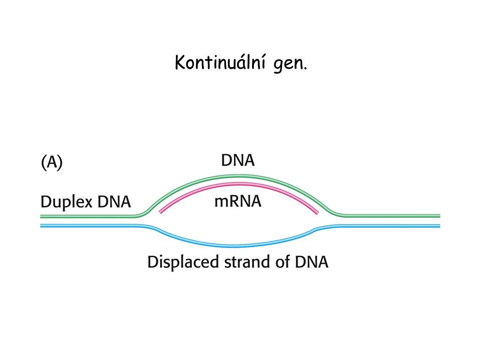 Kontinuální gen.