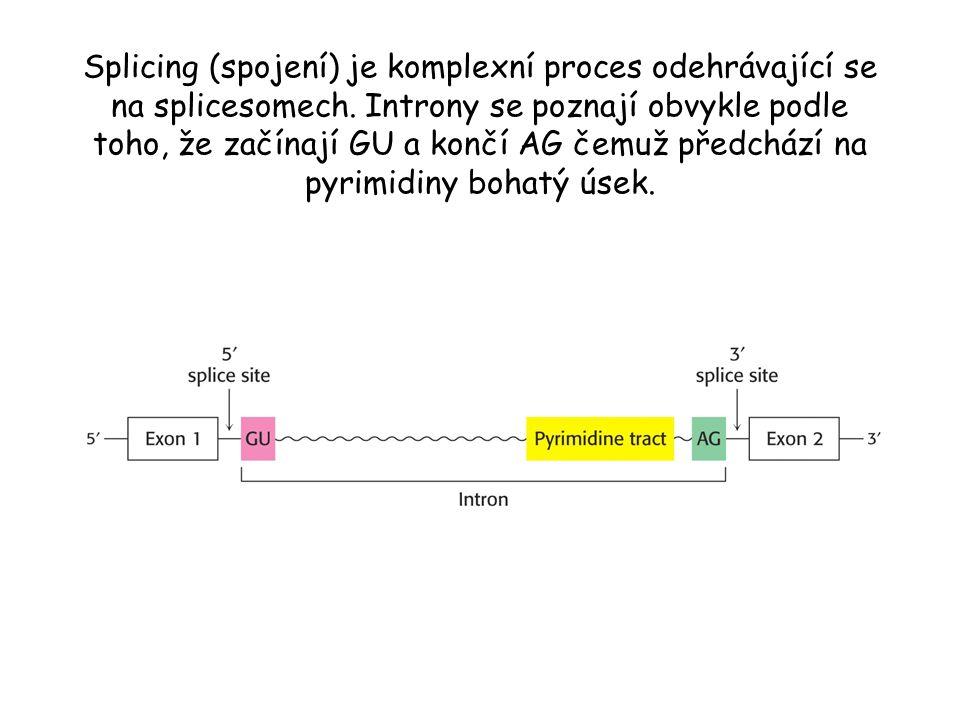 Splicing (spojení) je komplexní proces odehrávající se na splicesomech. Introny se poznají obvykle podle toho, že začínají GU a končí AG čemuž předchá