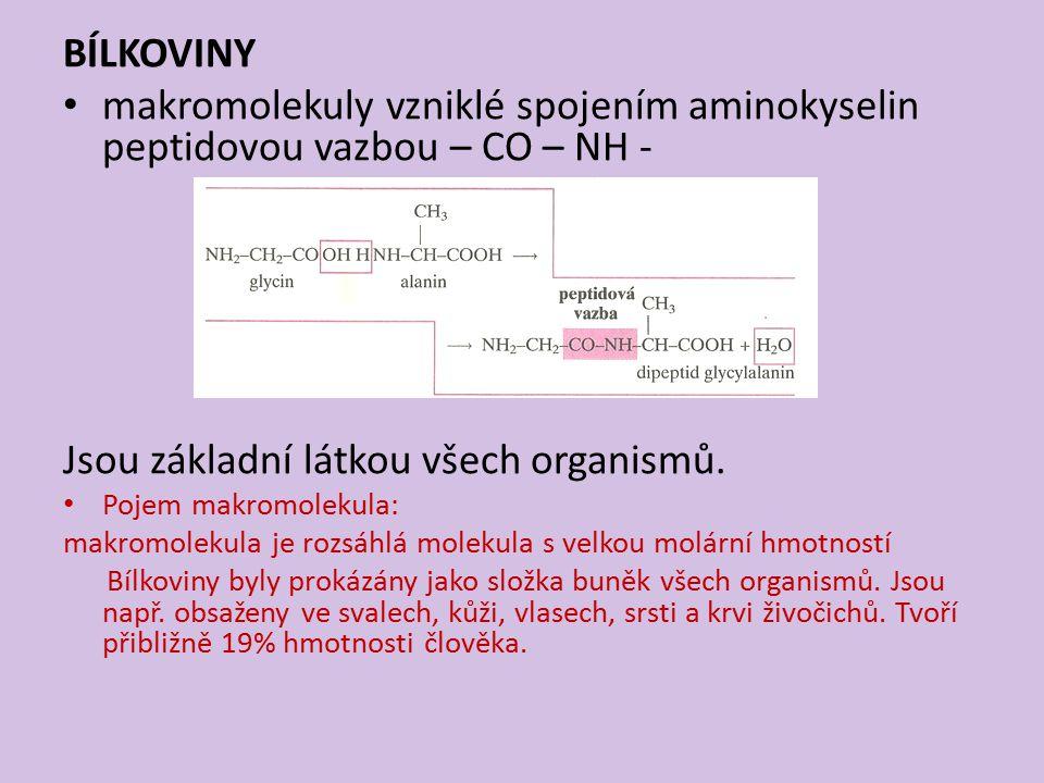 makromolekuly vzniklé spojením aminokyselin peptidovou vazbou – CO – NH - Jsou základní látkou všech organismů.