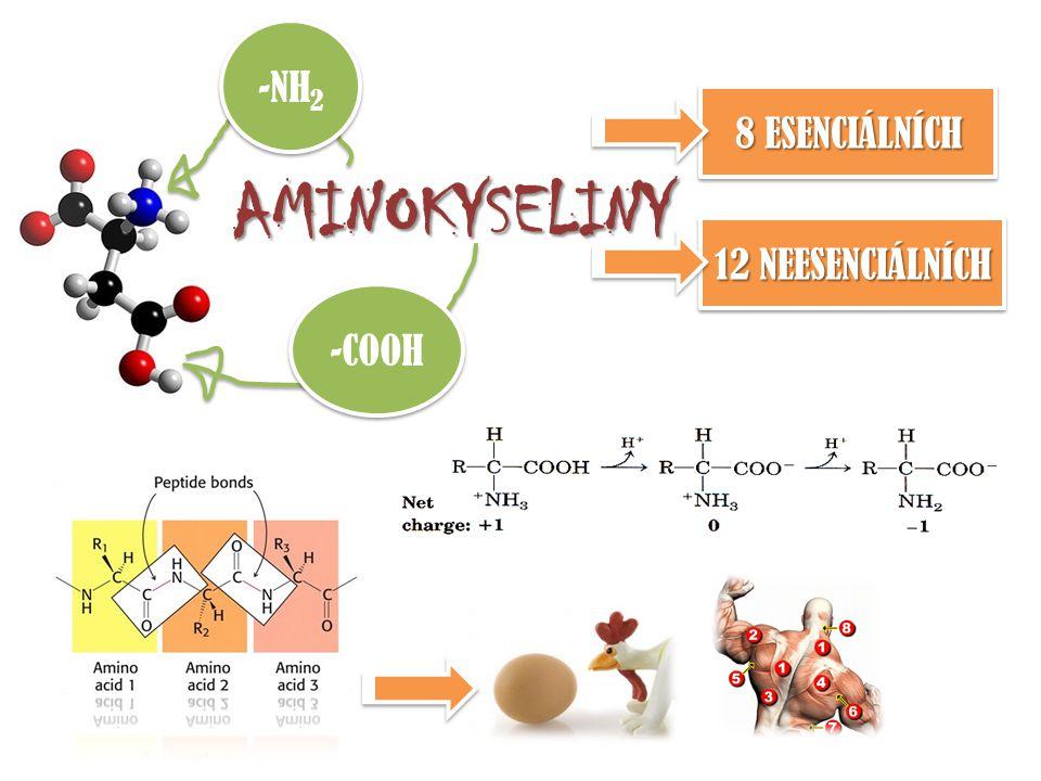 AMINOKYSELINY -NH 2 -COOH 8 ESENCIÁLNÍCH 12 NEESENCIÁLNÍCH
