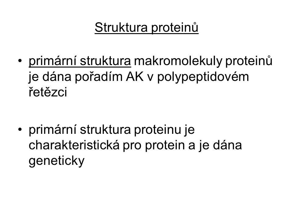 Struktura proteinů primární struktura makromolekuly proteinů je dána pořadím AK v polypeptidovém řetězci primární struktura proteinu je charakteristická pro protein a je dána geneticky