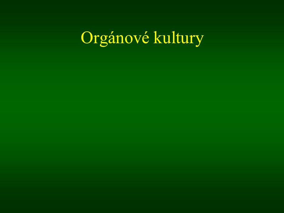 Orgánové kultury