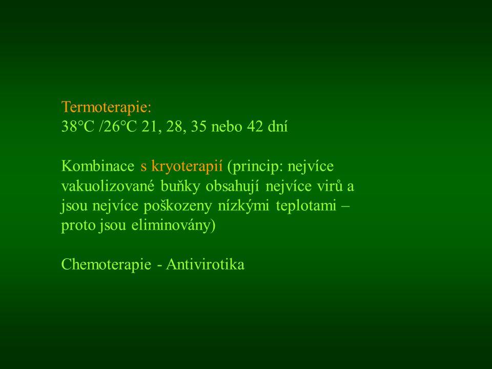 Termoterapie: 38°C /26°C 21, 28, 35 nebo 42 dní Kombinace s kryoterapií (princip: nejvíce vakuolizované buňky obsahují nejvíce virů a jsou nejvíce poš