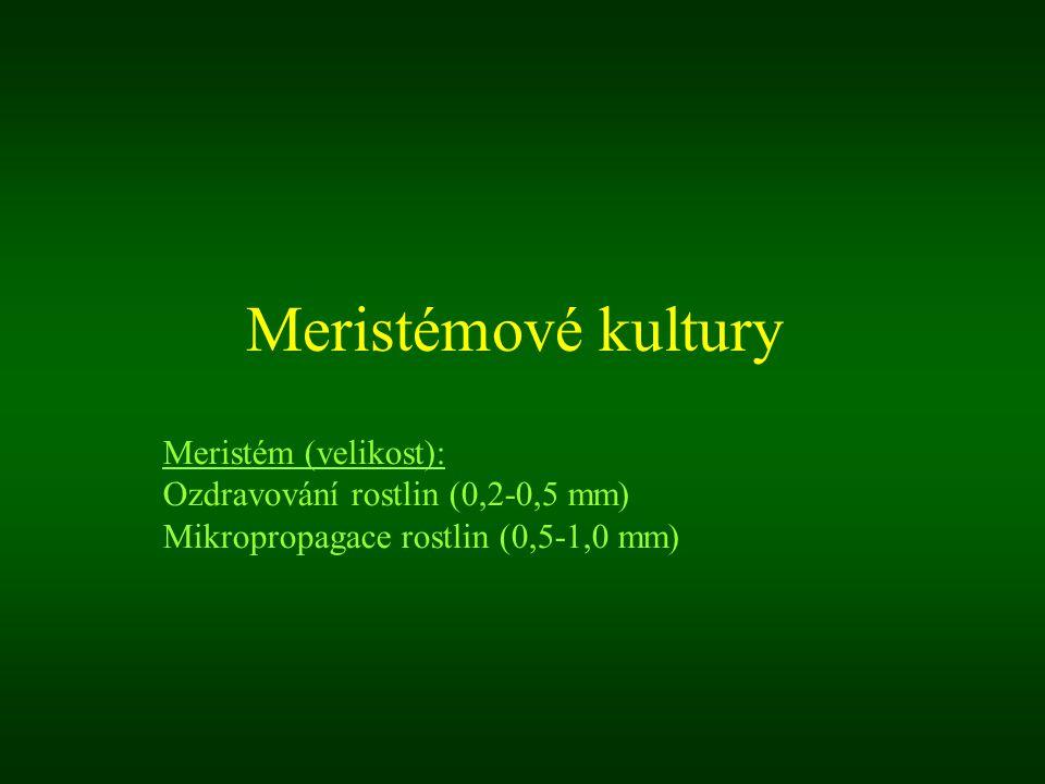 Meristémové kultury Meristém (velikost): Ozdravování rostlin (0,2-0,5 mm) Mikropropagace rostlin (0,5-1,0 mm)