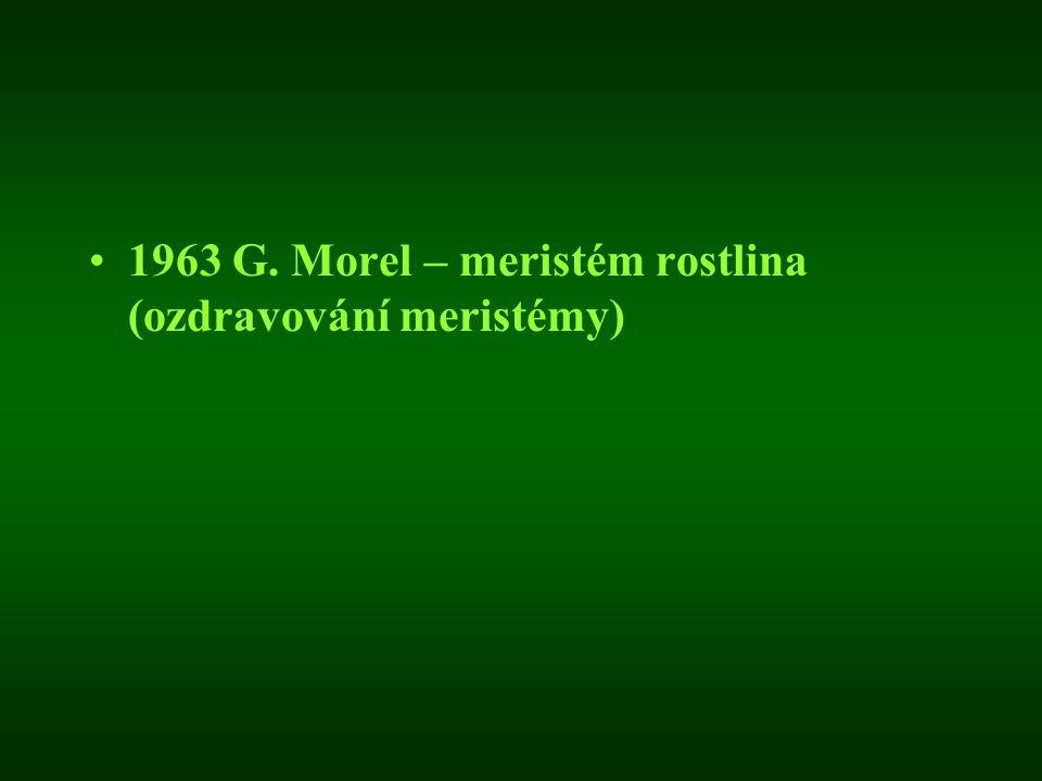 1963 G. Morel – meristém rostlina (ozdravování meristémy)