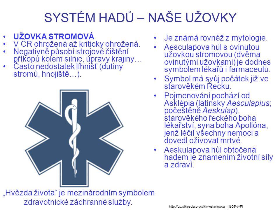 SYSTÉM HADŮ – NAŠE UŽOVKY UŽOVKA STROMOVÁ V ČR ohrožená až kriticky ohrožená.