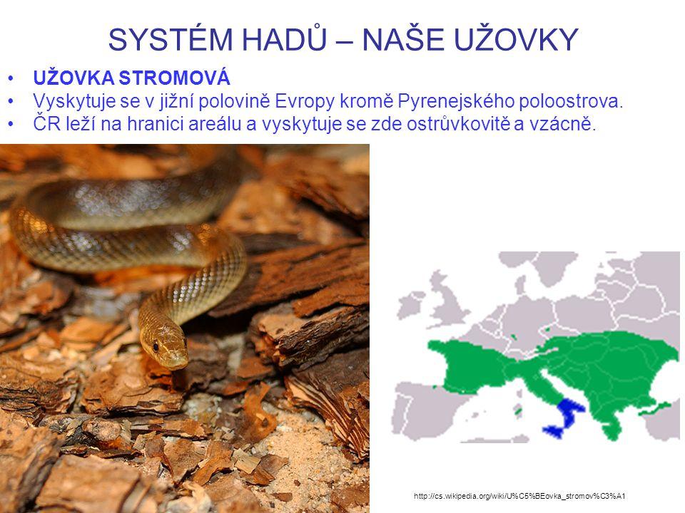 SYSTÉM HADŮ – NAŠE UŽOVKY UŽOVKA STROMOVÁ Vyskytuje se v jižní polovině Evropy kromě Pyrenejského poloostrova.